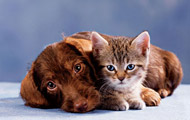 A young cat and puppy on carpeting